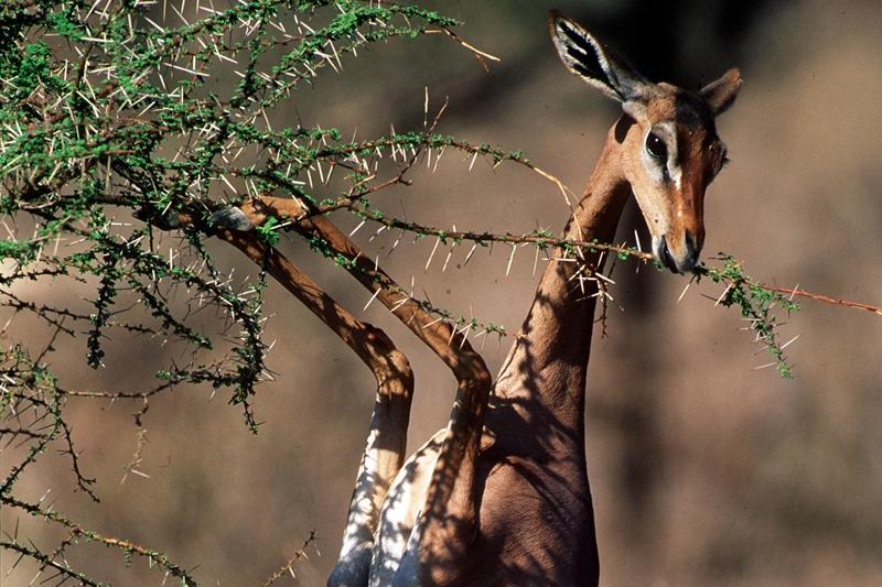 Rondreis kenia tanzania en zanzibar kamperen in de mooiste wildreservaten koning aap - Toiletten versieren ...