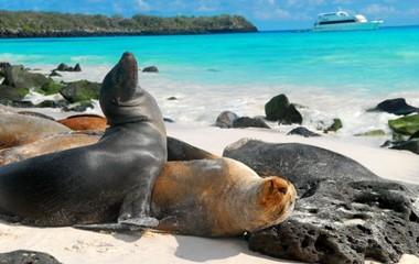 Snorkeling at Galapagos