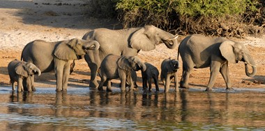 Addo, elephants