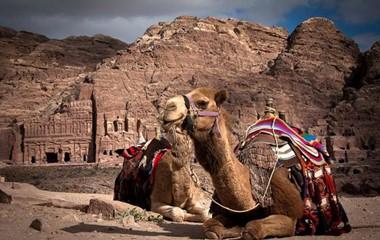 Petra Camels Resting