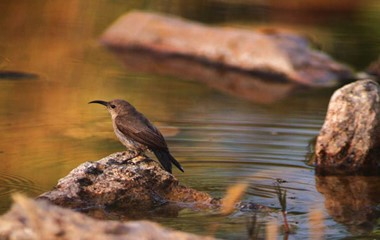 Rare Birds In Nature Reserve Of Dana