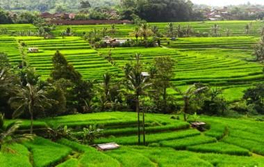 Ubud Region, Bali