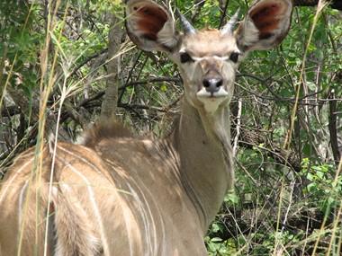 in Kruger Park