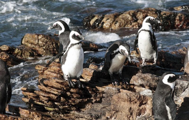 Internationale Hotelreis - ZUID-AFRIKA & SWAZILAND - 22 dagen; Wilde dieren en een spectaculaire natuur / internationale groep