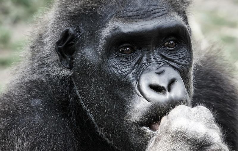 Sfeerimpressie Rondreis Oeganda - Parel van Afrika