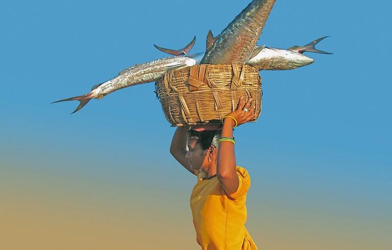 Koning Aap: Rondreis INDIA: SIKKIM EN ORISSA - 29 dagen; Het onbekende Oost-India