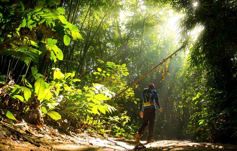 Koning Aap: Rondreis INDONESIË, BRUNEI EN MALEISIË: BORNEO - 28 dagen; Complete jungle ervaring