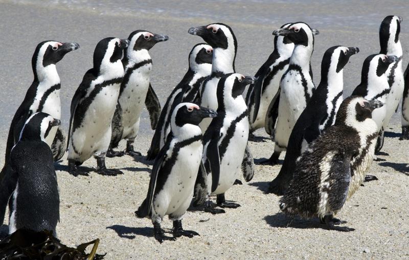 Koning Aap: Rondreis ZUID-AFRIKA Kaapstad en Tuinroute - 15 dagen; Dwalen langs de Tuinroute