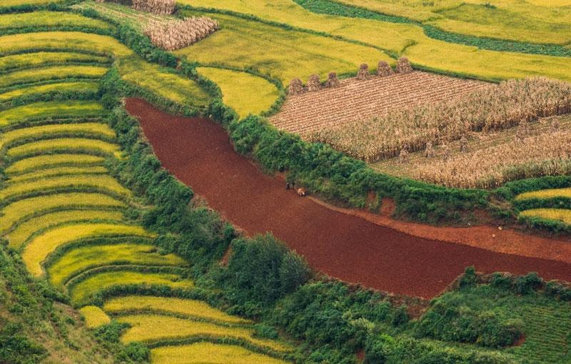 Koning Aap: Rondreis CHINA: YUNNAN - 22 dagen; Langs de Zuid-Chinese theeroute