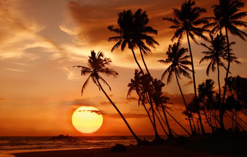 Koning Aap: Rondreis SRI LANKA - 21 dagen; Juweel van de Indische Oceaan