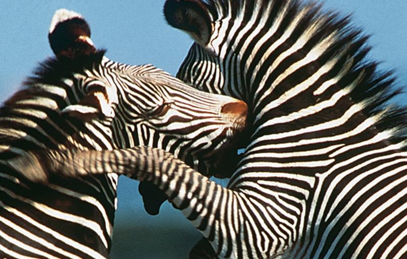 Rondreis KENIA, TANZANIA EN ZANZIBAR - 22 dagen; Ruige wildernis en gouden stranden