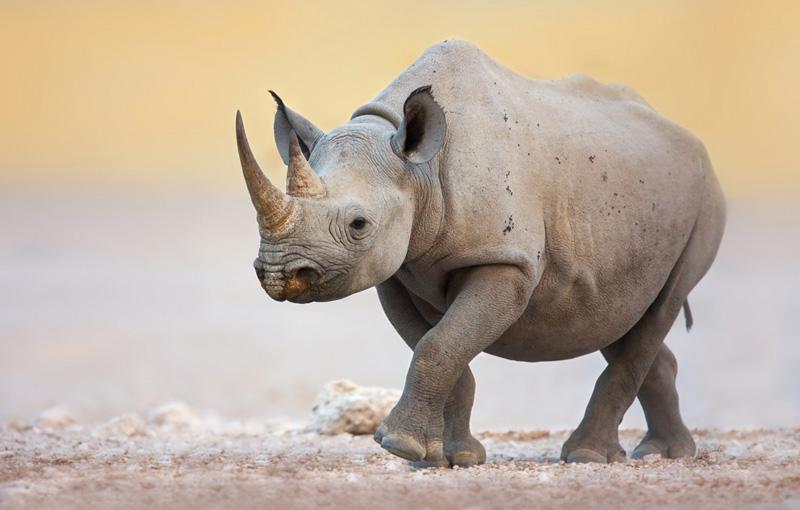 Koning Aap: Rondreis ZUID-AFRIKA, NAMIBIË, BOTSWANA EN ZIMBABWE - 23 dagen; Afrika op z'n best