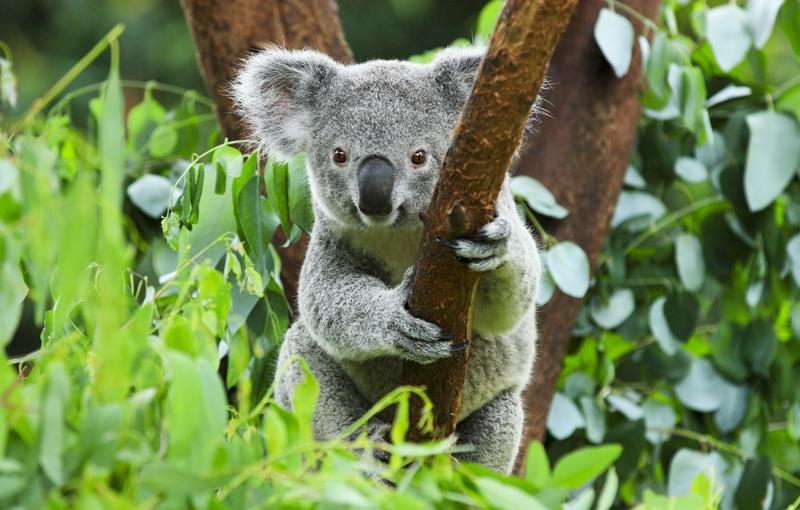 Koning Aap: Rondreis AUSTRALIË HOOGTEPUNTEN - 30 dagen; Land van Kangoeroes en rode aarde
