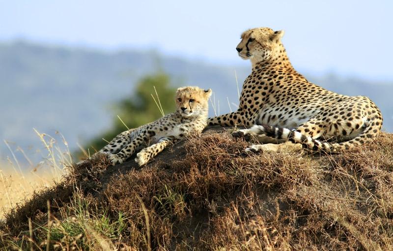 Rondreis KENIA, TANZANIA EN ZANZIBAR - 22 dagen; Kamperen in de mooiste wildreservaten