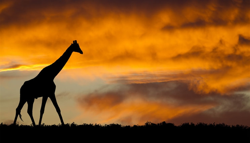 Familiereis ZUID-AFRIKA EN SWAZILAND AVONTUUR - 21 dagen; Op avontuur in Zuid-Afrika
