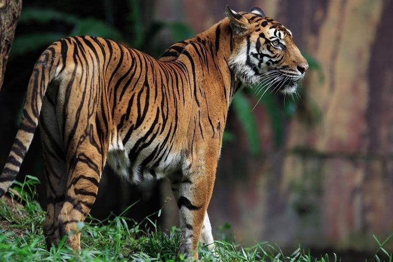 Koning Aap: Rondreis INDIA: RAJASTHAN, GUJARAT EN MUMBAI - 23 dagen; Leeuwen, tijgers en tradities