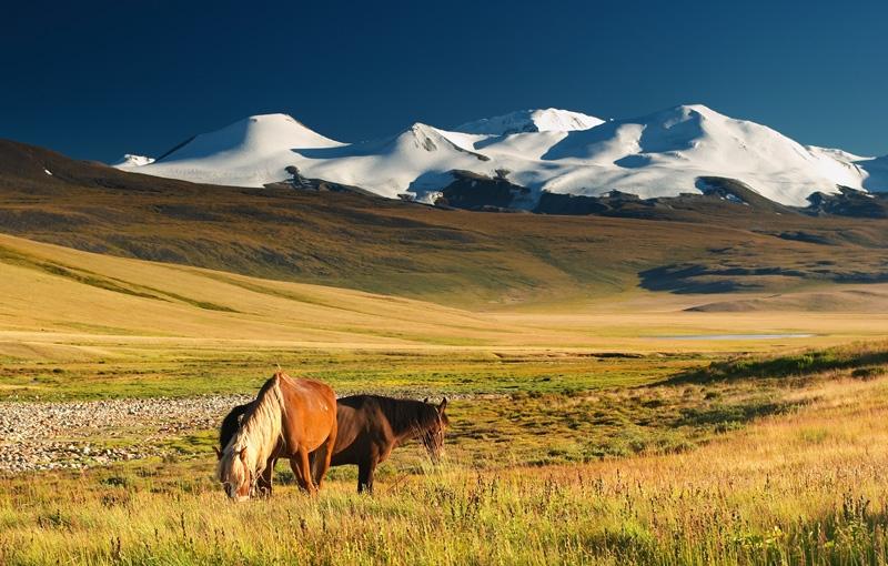 Koning Aap: Rondreis MONGOLIË - 23 dagen; Overnachten op eindeloze grasvlaktes