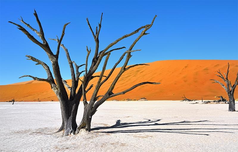 Sfeerimpressie Familiereis ZUIDELIJK AFRIKA - 23 dagen; Baobabs en kokerbomen