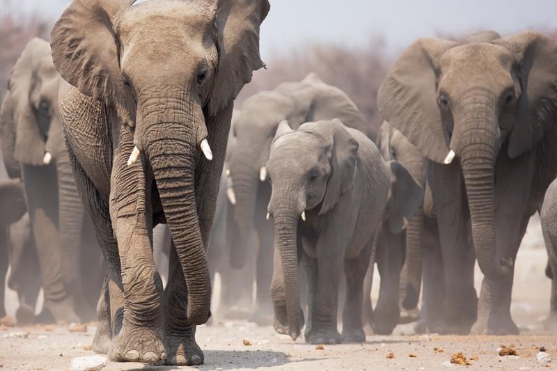 Südafrika, Namibia, Botswana, Simbabwe Singlereise (Bild: Shoestring International)