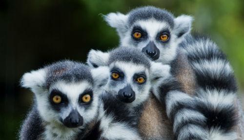 Madagaskar Singlereise (Bild: Shoestring International)