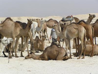Groepsreis Egypte Strand en Cultuur ; Mummies, piramides en Rode Zee