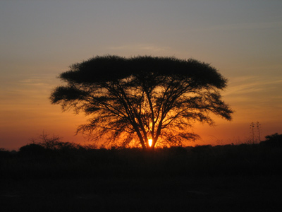 Shoestring: Groepsreis Kenia & Tanzania; Op safari rond de evenaar