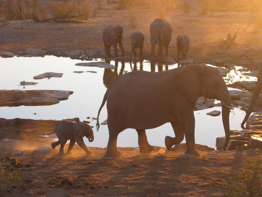 Shoestring: Groepsreis Zuid-Afrika in 2 weken; Wijn en walvissen