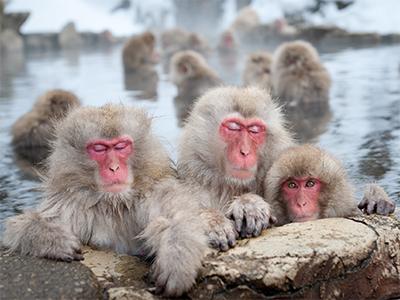 Shoestring: ReisKnaller: Japan Winterreis 15 dagen; Winter in het 'Land van de Rijzende Zon'