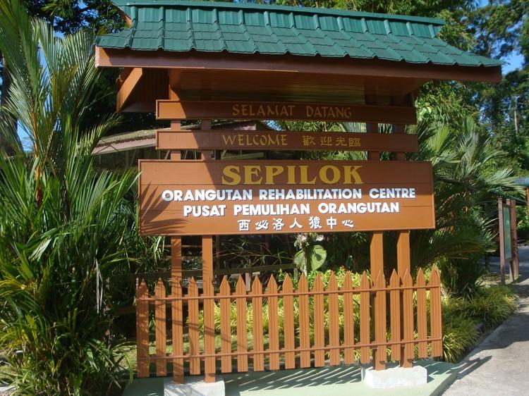 Sepilok & Kinabatangan - Reisebaustein Malaysia