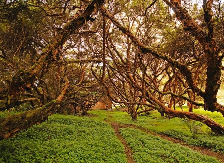 Het wonderlijke landschap van El Ángel - Ecuador