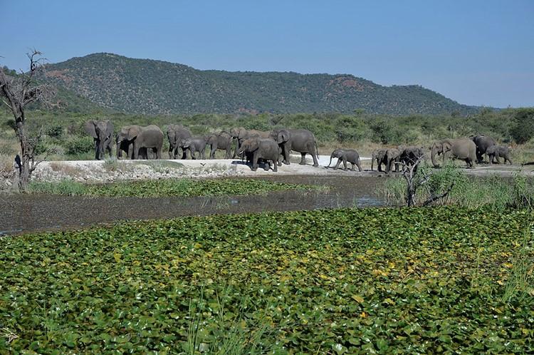 Madikwe Private Game Reserve