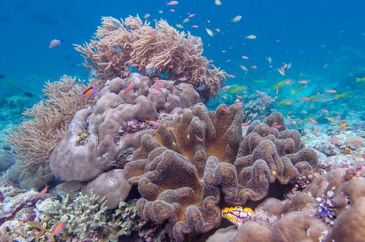 Gaya Island- Borneo - Maleisië