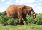 Addo Elefanten Park
