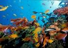 Snorkelen in de Rode Zee bij Aqaba - reis Jordanië