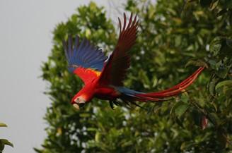 Rundreise Costa Rica - Entdeck Costa Rica