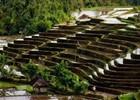 Rijstvelden bij Belimbing