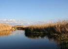 Jordani%c3%ab%20-%20Azraq%20%20wetlands%20-%20water%202.PNG