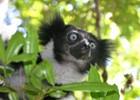 Madagascar2GO%20-%20Indri%20-%20shutterstock_674036.jpg