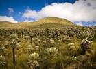 Ecuador%20-%20El%20Angel%20-%20reservaat%20-%20shutterstock_258281255.jpg