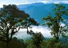 Parque Nacional Podocarpus - Ecuador