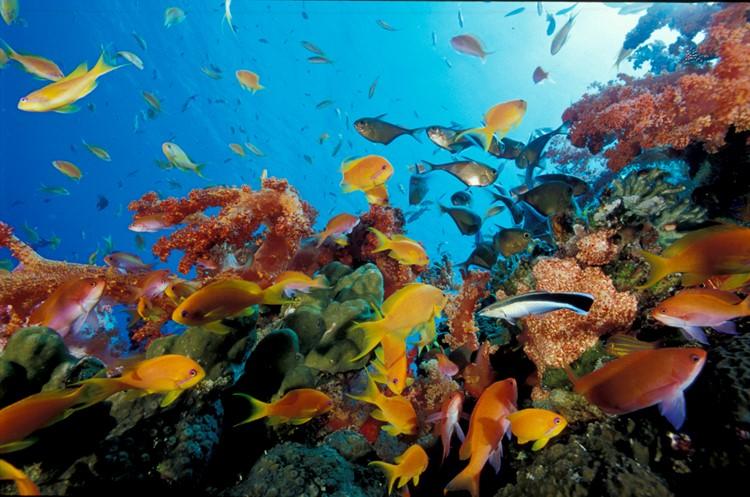 Koraalrif - Aqaba