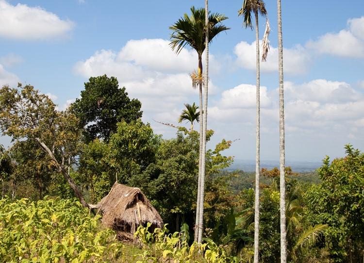 Tetebatu - Lombok - Indonesië