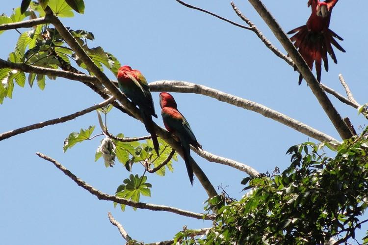 Tambopata – Zuid Peru