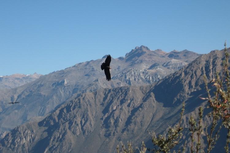Bij de Cruz del Condor in de Colca Canyon - Zuid Peru