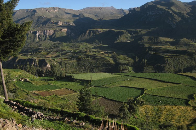 Terrassen in de Colca Canyon - Zuid Peru