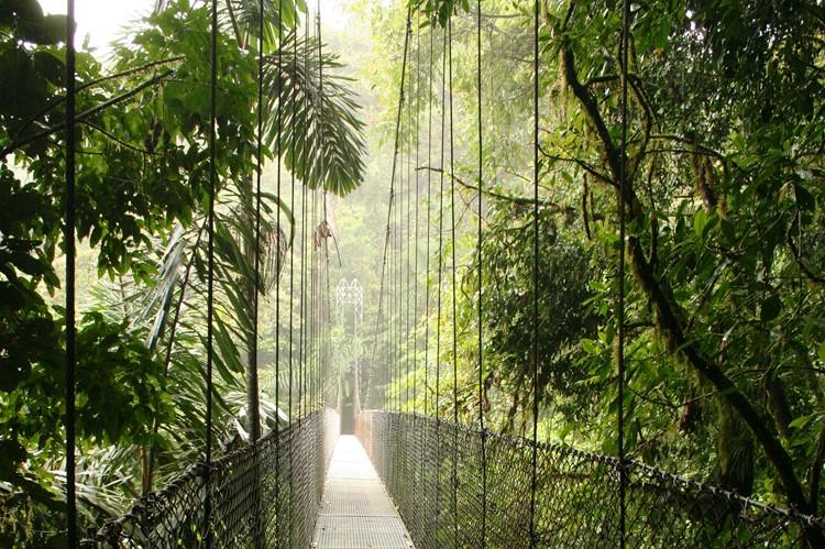 Arneal Hanging bridges