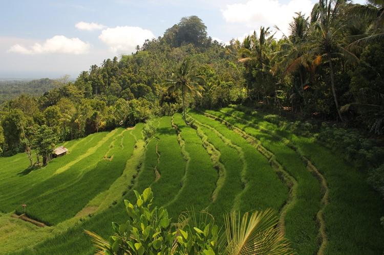 Ubud - Bali - Indonesië