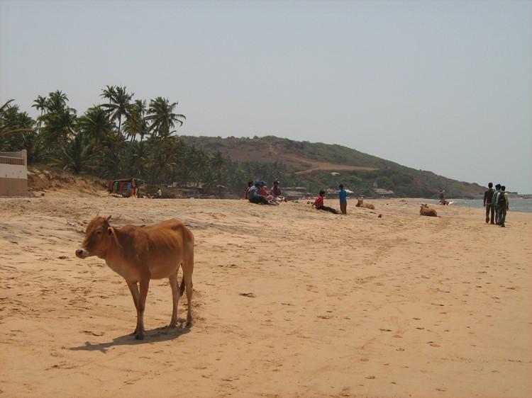 Goa – reis India