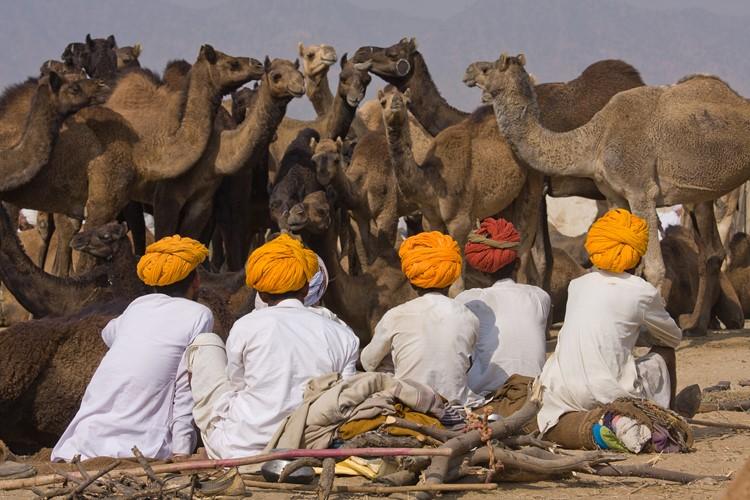 Pushkar tijdens de camel fair