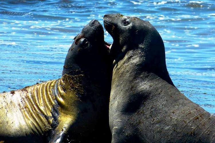 Peninsula Valdés - Puerto Madryn - Argentinië
